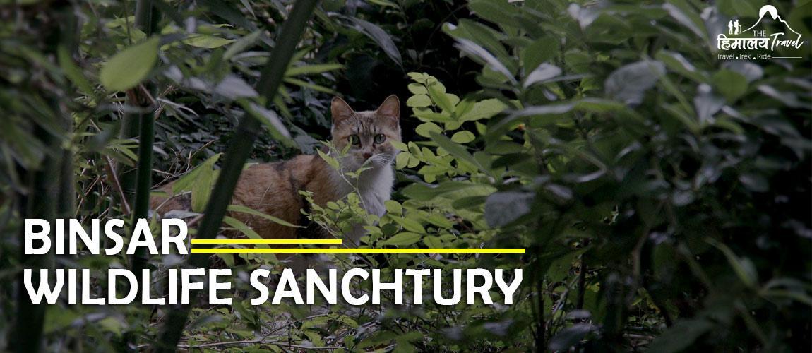 Binsar_Wildlife_Sanchtury